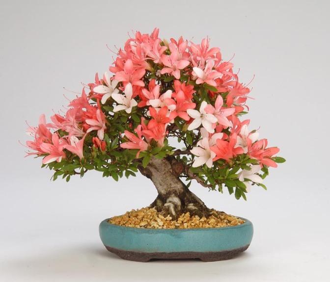 Top 5 Best Decorative Plants